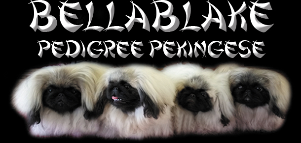 Bellablake Pedigree Pekingese
